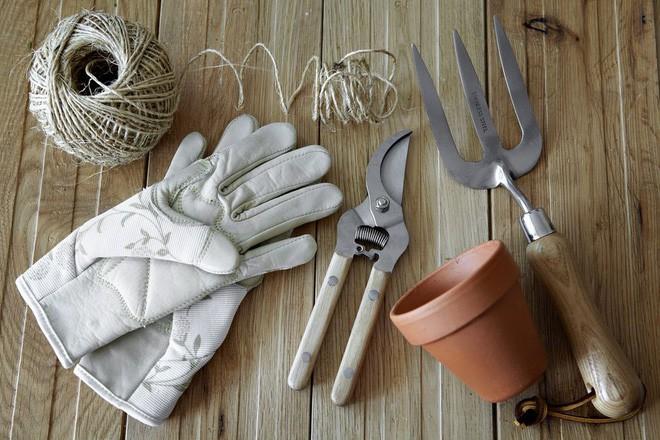 Hướng dẫn cách trồng cà chua lớn nhanh như thổi, thu hoạch mỏi tay trong mùa hè - Ảnh 1.