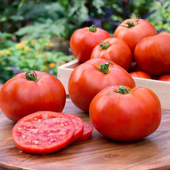 Hướng dẫn cách trồng cà chua lớn nhanh như thổi, thu hoạch mỏi tay trong mùa hè - Ảnh 6.