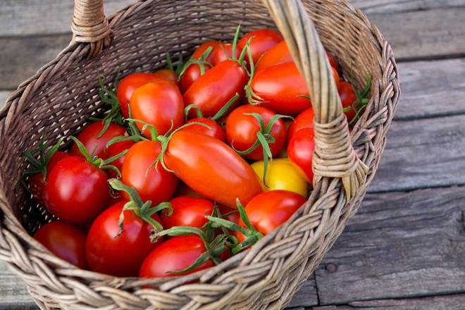 Hướng dẫn cách trồng cà chua lớn nhanh như thổi, thu hoạch mỏi tay trong mùa hè - Ảnh 7.