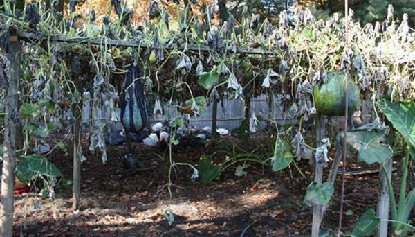 Vườn rau rộng tới 8000m² giữa thủ đô nước Mỹ của người phụ nữ Việt - Ảnh 3.