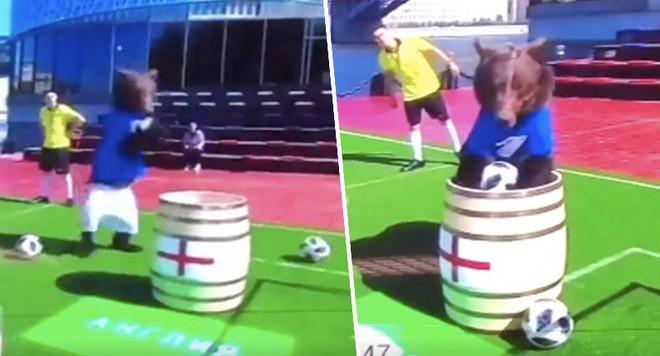 Dùng gấu để dự đoán kết quả World Cup 2018, chương trình truyền hình Nga khiến cộng đồng mạng phẫn nộ - Ảnh 2.