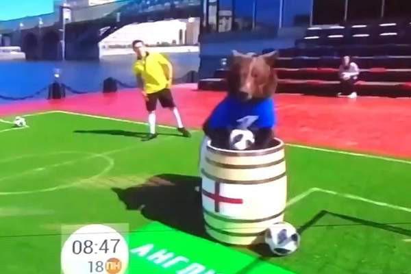 Dùng gấu để dự đoán kết quả World Cup 2018, chương trình truyền hình Nga khiến cộng đồng mạng phẫn nộ - Ảnh 3.